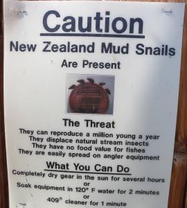 NZ mudsnails